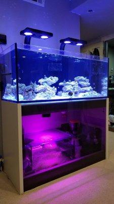Plastic for the Reef Aquarium, Part 1