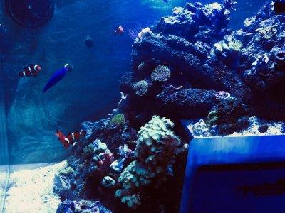 Plastic for the Reef Aquarium, Part 2