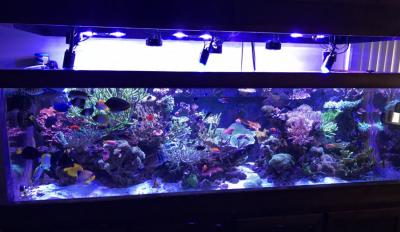 Plastic for the Reef Aquarium, Part 3