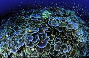 SPS and LPS Coral: Your Guide to Care and Feeding