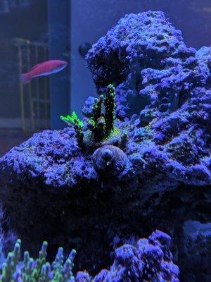 garf.bonsai-week2.jpg