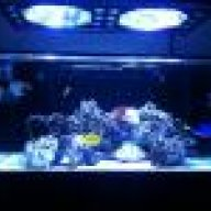 Show me your RMF Red Matrix Acros   REEF2REEF Saltwater and