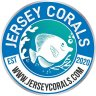 Jersey Corals
