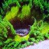 Rhydder_Reef