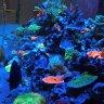 ReefJunkie1989