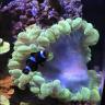 Stones-Reef