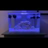 Lennon's Reef
