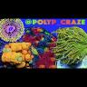 polyp_craze