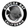 Patrick M Bodega Aquatics