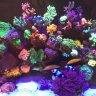 Mothys mixed reef