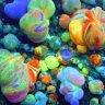 deztheclownfish