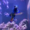Reefkeeper14