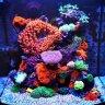 My_Reef_Tank