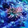 reef_flapper