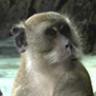 Monkeytank