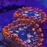 lionfish5740