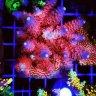 CoralFragZ