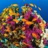 Reef News
