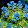 reef / aholic