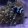 palmerbasskilla