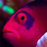 reefkeeperCOL