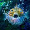 ReefHog