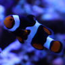 Abundant Life Aquariums
