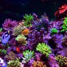 Reef Solution