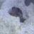 BloopFish