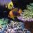 pro_aquarist