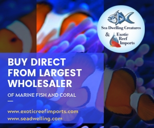 Exotic Reef Imports & Sea Dwelling Creatures