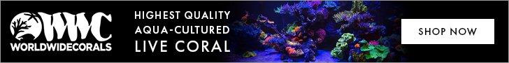 World Wide Corals - Quality Aqua-cultured Coral