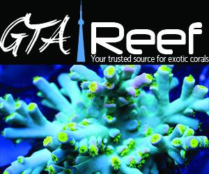 GTA Reef