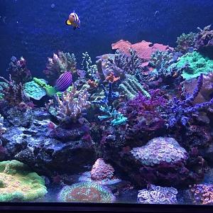 Tom's Reef