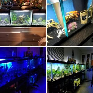 Rae&Ray's Aquariums