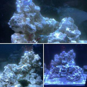 IM 10 gallon reef tank