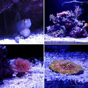 Kris 2020 Miracles 67 Gallon Custom Mixed Reef