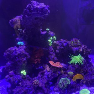 Red Sea 200XL