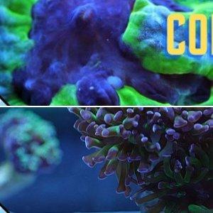 coral care
