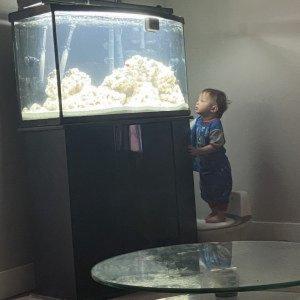 Fish tank #1