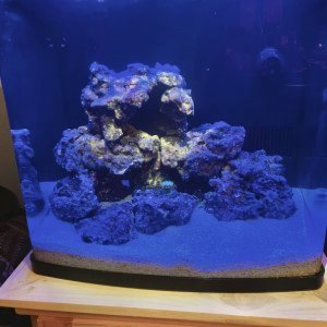 My First Reef Aquarium