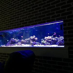 400G Basement Reef