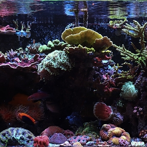 FTS (Tank Only) 7/11/17