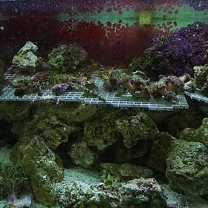 YouTube: full tour of stunning large SPS reef tank - YouTube