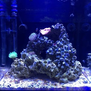 Greg's Mixed Reef