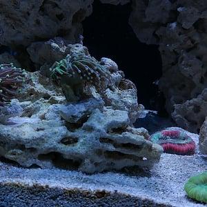 New Corals 7-17-17 - Sheltered Reef Aquaculture