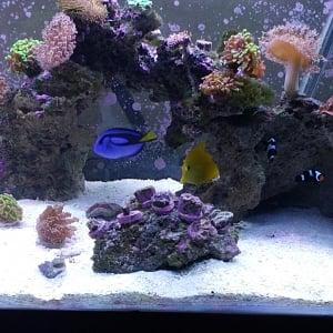 Dew reef