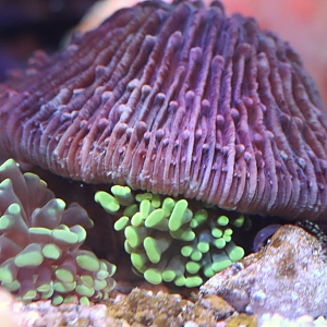 Off roading plate coral on torch