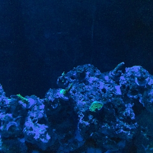 Grainy Reef