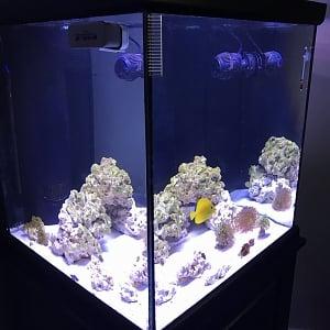 10/6/2017 60g cube